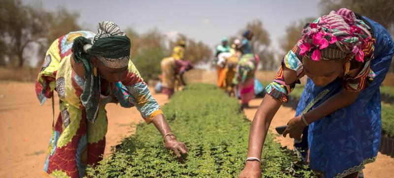 Pérdida de biodiversidad amenaza lucha contra el hambre: ONU